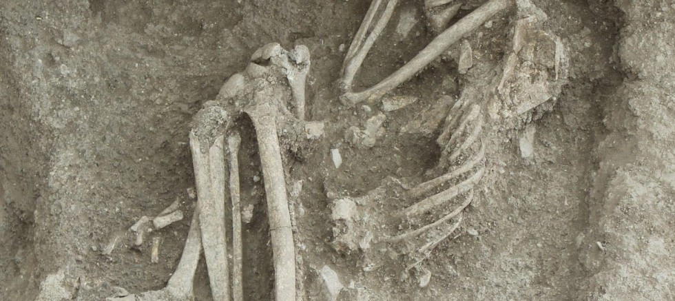 8 bin 500 yıllık iskelet bulundu