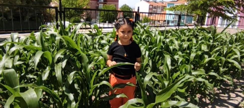 İlkokul öğrencileri yerli tohumla 16 çeşit sebze üretiyor