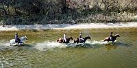 Üniversitede yetiştirilen atlar yeni sahipleri için koşacak
